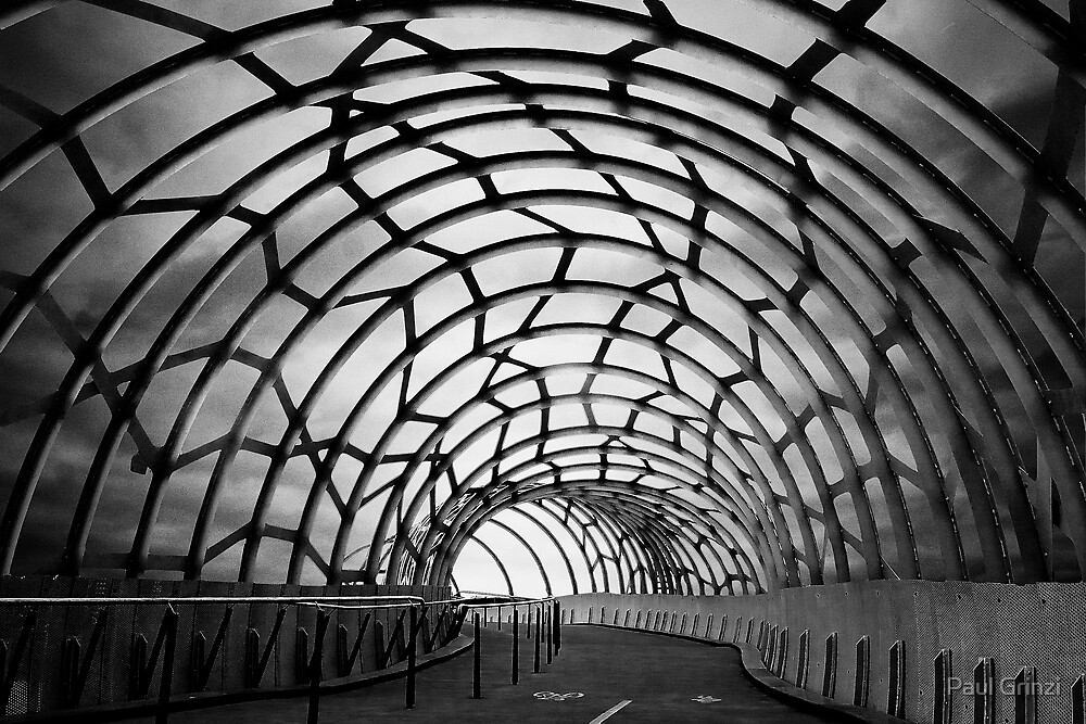 Tangled in an urban web by Paul Grinzi
