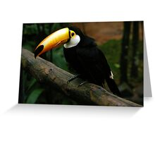 Toco Toucan - Iguassu Falls, Brazil Greeting Card