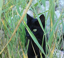 Can you see me? by melodie
