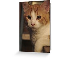 Mister Cool Greeting Card