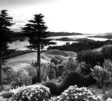 Sunrise at Larnach  by Elizabeth Tunstall