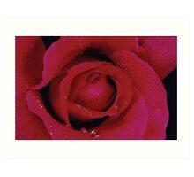 Rose1 Art Print