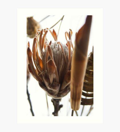 Dried Flowers Art Print