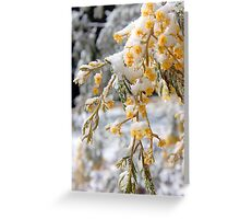 Wattle Snow Greeting Card