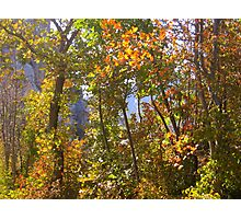 AUTUMN GAME IN THE WOODS Photographic Print