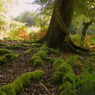 The New Forest: Mossy Roots by Rob Parsons