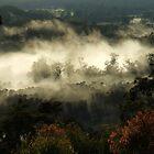 """ Morning Magic "" by debsphotos"
