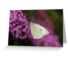 Large White Butterfly Greeting Card