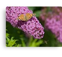Painted lady and the Hoverfly Canvas Print