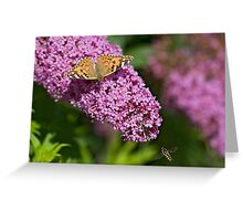 Painted lady and the Hoverfly Greeting Card