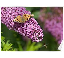 Painted lady and the Hoverfly Poster