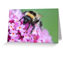 Bee's face! Greeting Card