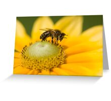 Honey bee washing his face! Greeting Card
