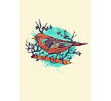 bird Photographic Print