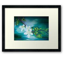 Apple blossoms Framed Print