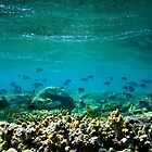 Knuckle Reef by Joshdbaker