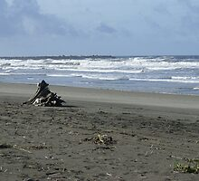 Ocean Shores by Loisb