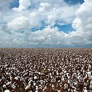 Cotton under the Clouds by Bonnie T.  Barry
