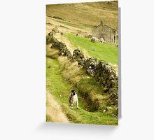 Hill Sheep Greeting Card