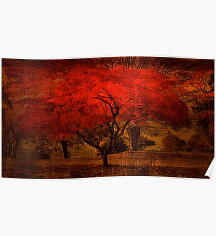 Bright Maple Tree Poster