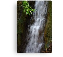 Morning Splash Canvas Print