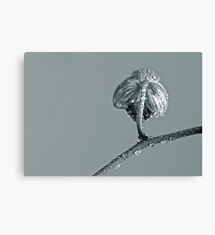 Insinuating Canvas Print