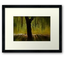 Willow in the sunset Framed Print
