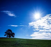 Lone Tree in the Sun by faithinmotion