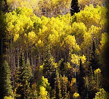 Aspens and Pine Trees - Alpine Loop by Ryan Houston