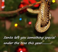 something special for you under the tree by Brock Hunter