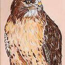 Hawk by Dawn B Davies-McIninch