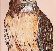 Hawk by Dawn B Davies-McIninch