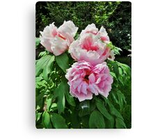 Tree Peony  From Crimea Canvas Print