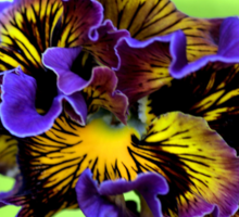 Shades of Frilly Pansy Sticker
