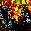 Fall in Napa by Visual   Inspirations