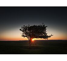 Windswept tree at Pemclawdd, Gower Photographic Print