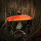 Mysterious Mushrooms by steppeland