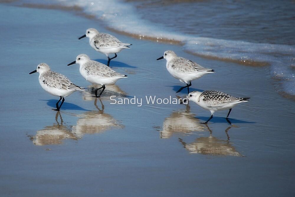 A Walk on the Beach by Sandy Woolard