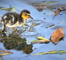 Splish, Splash by Lisa G. Putman