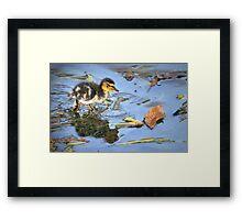 Splish, Splash Framed Print
