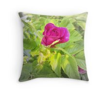 Late Summer Rose Throw Pillow