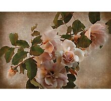 rose bower Photographic Print