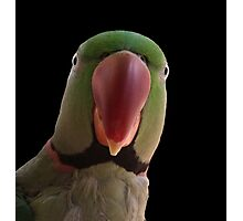 Mr Slater's Parrot Photographic Print