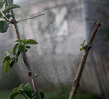 Web  by Jodie Bennett