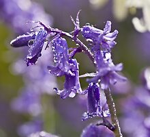 Bluebells In The Rain by Evelyn Flint - Daydreaming Images