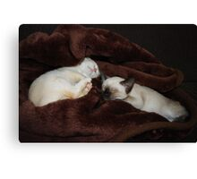 Kittens Tucked In Canvas Print