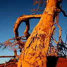 Outback Tree by bahrainbbqben