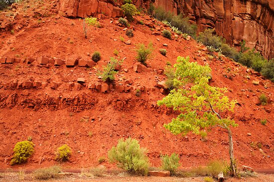 Tree and Red Rock, Zion National Park, Utah by Olga Zvereva