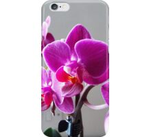 Purple Orchid iPhone Case/Skin