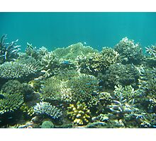 Great Barrier Reef Fish Photographic Print